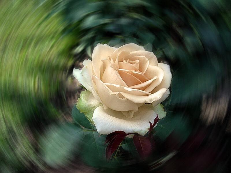 Блузка цвета чайной розы от Людмила Лебедева