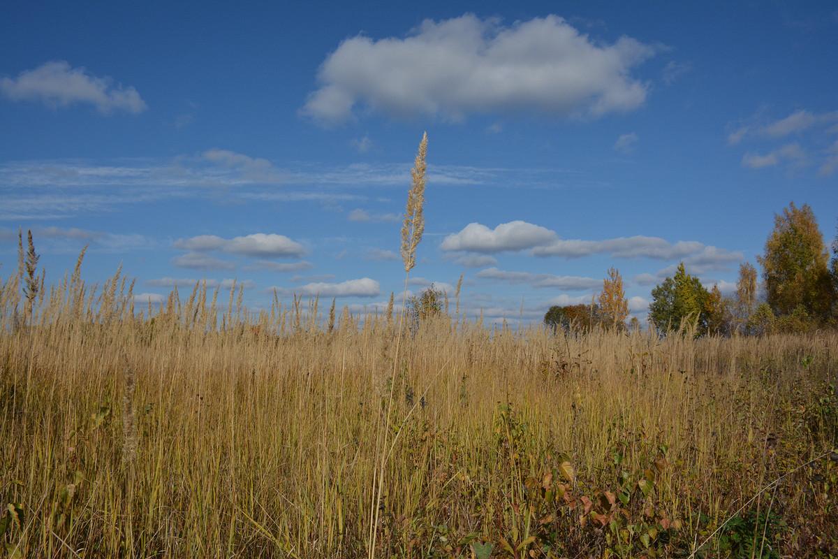 Яркая осень от Sorenza