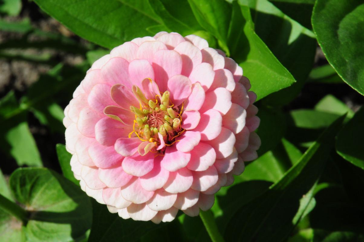 Цветы - длявас! =)