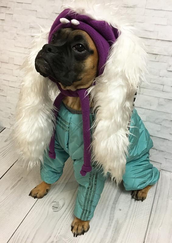 Теплый комбинезон собакам