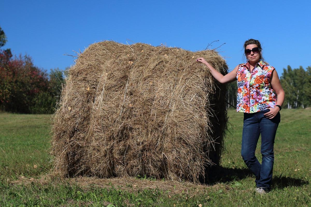 Рубашка, осень, «Автопробегом побездорожью иразгильдяйству»