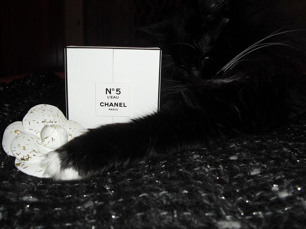 Без «Шанель» никуда