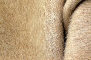 Альпака – бесценный дар природы