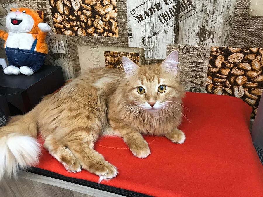Портрет кота: теплая лежанка смашинной вышивкой