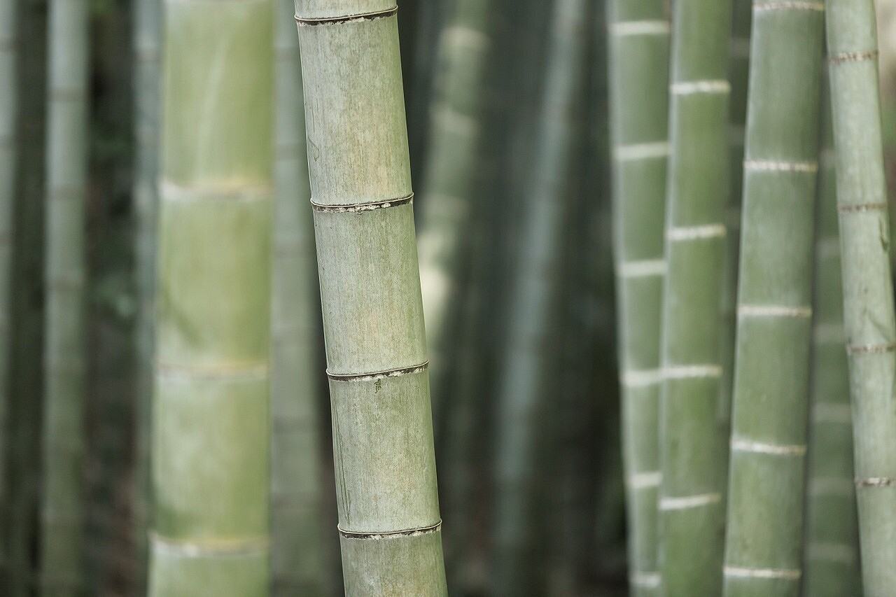 Что заткань бамбук?