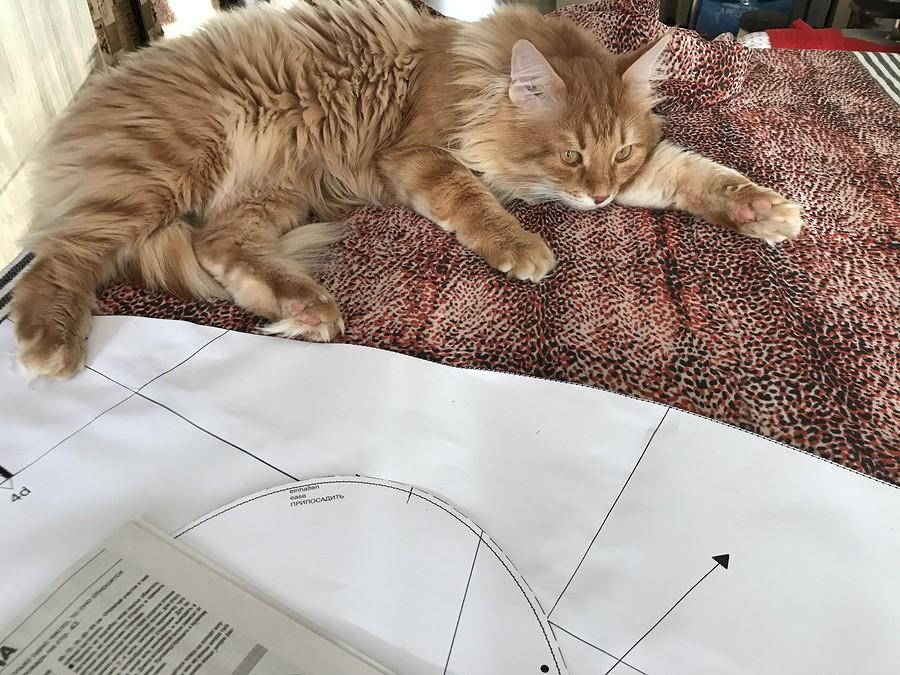 Инструкция потехнике безопасности «шьющего» кота