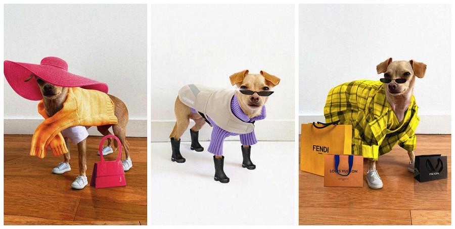 Модный Instagram недели: собака-инфлуенсер запустила собственный бренд
