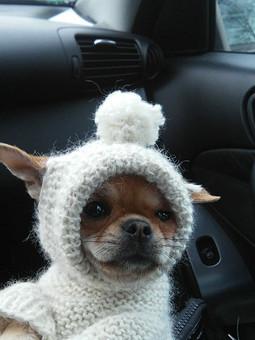 Работа с названием Свитер  с капюшоном для собачки