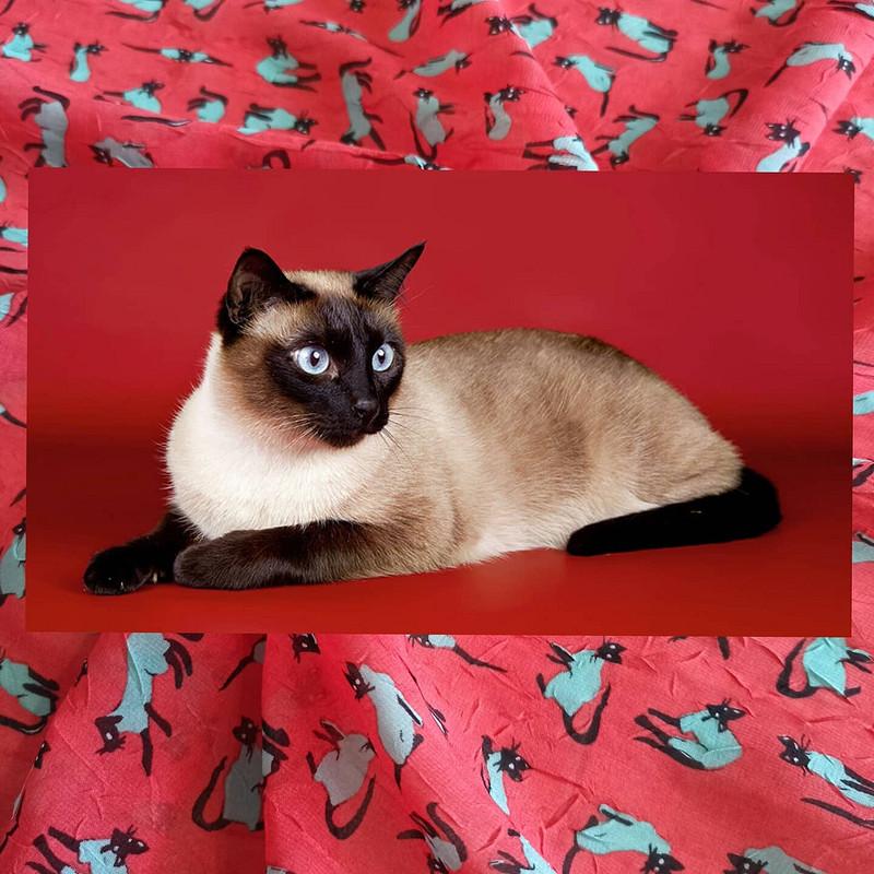 Платье «Сиамские кошки» изшифона - креш от MarSel